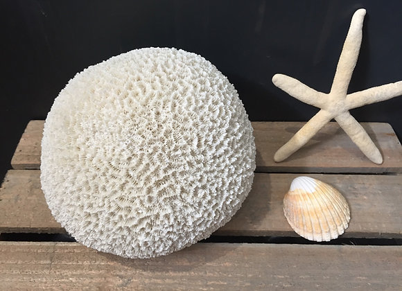Gisela Graham round resin coral decorative ornament