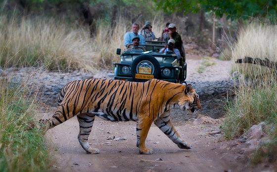 corbett Jeep Safari.jpg