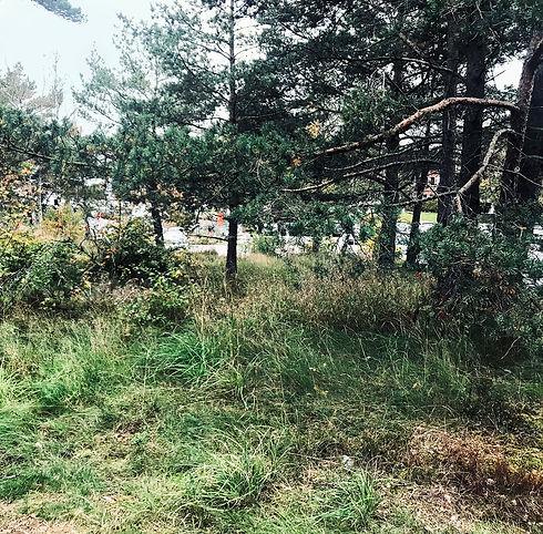 skogsdungen.jpg