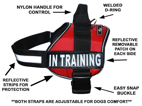 "Wholesale: Working ""In Training"" Harness"