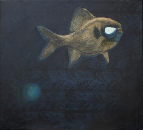 Mélytengeri hal