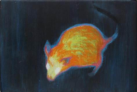 Rat (thermo)