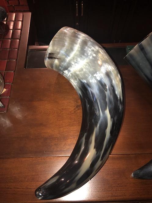 Large polished Buffalo horn