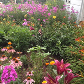 Lovely Flower Garden at Apple Blossom Therapeutic Massage!