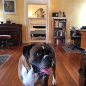Ulas the greeter at Apple Blossom Therapeutic Massage!