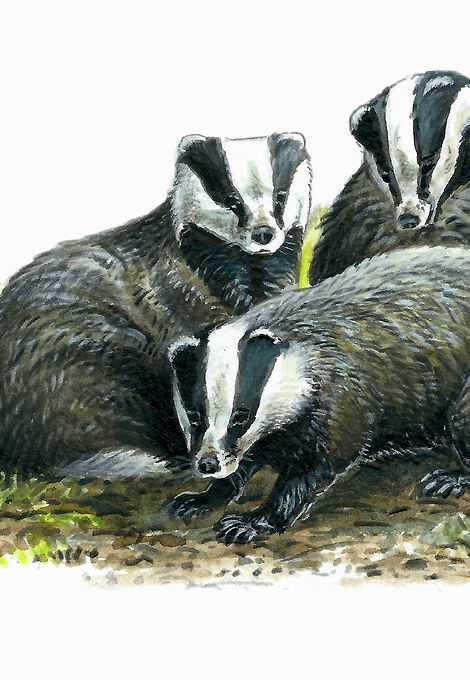 Badger group 1.jpg