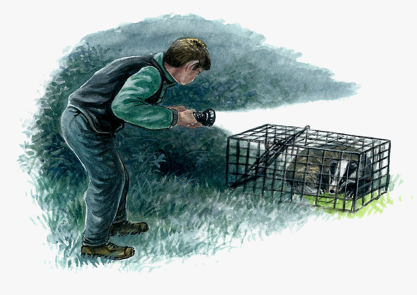 Badger trap 1.jpg