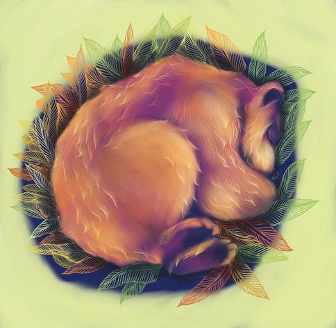 bear IG .jpg