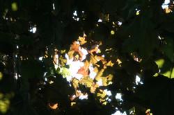 La lumière vive avive…!