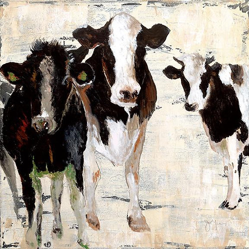 Cows hanging out canvas