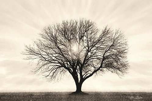 tree grow different directions