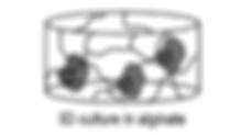 macrophage v2.png