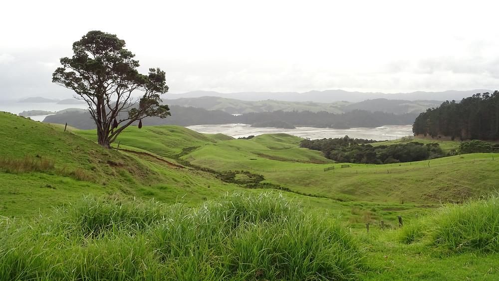 Neuseeland Coromandel Halbinsel. Foto: Christian Langer