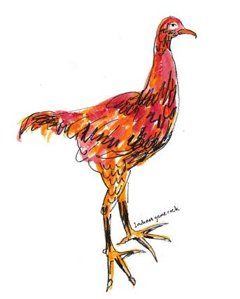 Indian cock large M.jpg