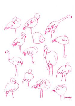 Flamingos A4.jpg