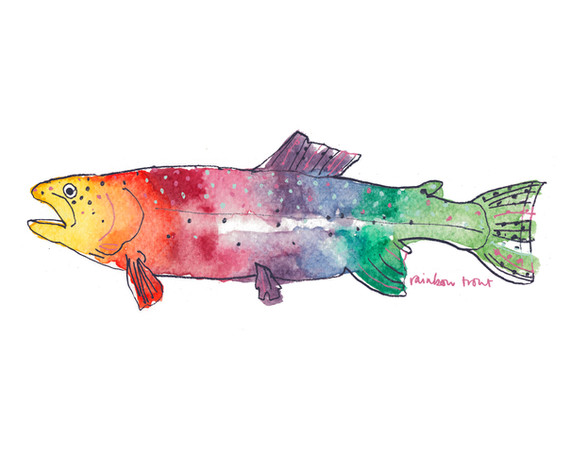 rainbow trout large M.jpg