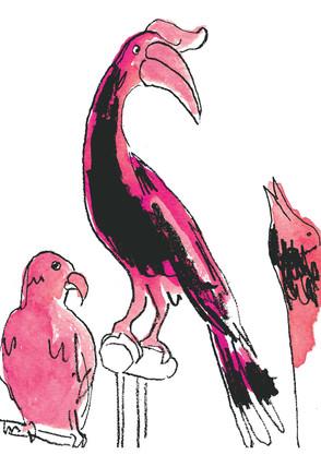 D'arcy Thompson Hornbill