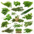 צמחי מרפא ותבלין