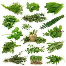 Growing Herbs Chart