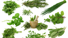 The Energy of Herbs