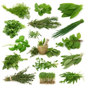 8 fleurs et herbes à mettre au jardin pour une pharmacie naturelle