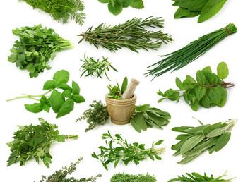 Descubre el uso de algunas plantas curativa