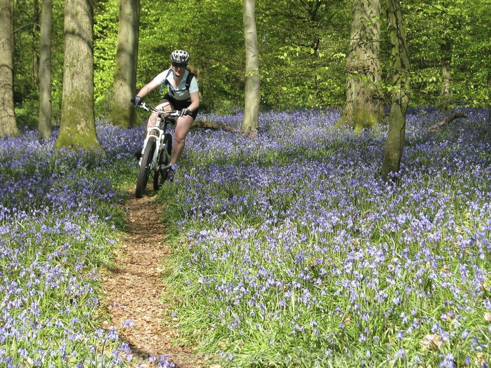 Biking and bluebells