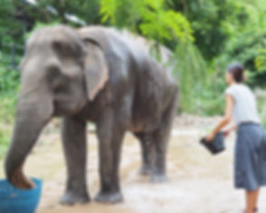 Thailand Elephants | The Good Camps