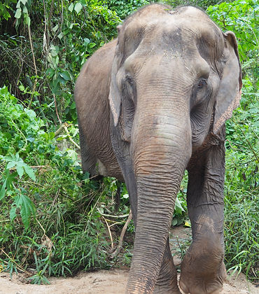 Thailand Elephants | The Good Camps
