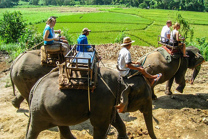 Thailand Elephants   Threats to Elephants in Thailand