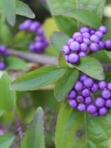 Bloomin Plants 2014 (33).jpg