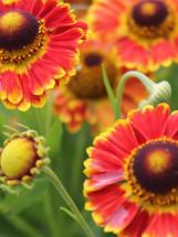 Bloomin Plants 2014 (114).jpg 2015-2-20-