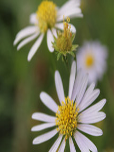 Bloomin Plants 2014 (134).jpg