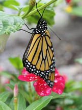 Bloomin Plants 2014 (58).jpg 2015-1-14-2