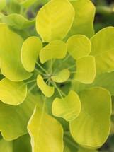 Bloomin Plants 2014.jpg