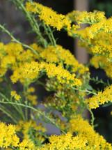 Bloomin Plants 2014 (90).jpg
