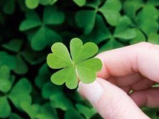 Que sorte a sua!
