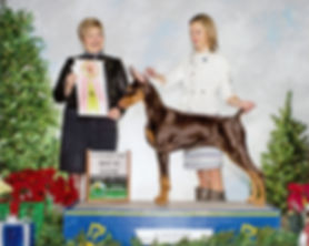 Allettare N Kettle Cove Secret Crown Jewel | Champion Doberman
