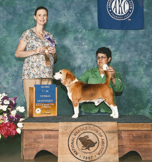 2009 Beagle National Specialty Show