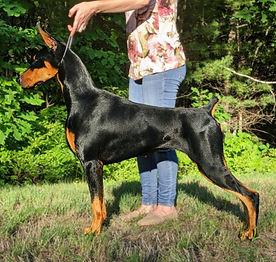 Neuma wins Best Puppy In Show