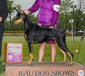 Breed Winner & New Grand Champion!