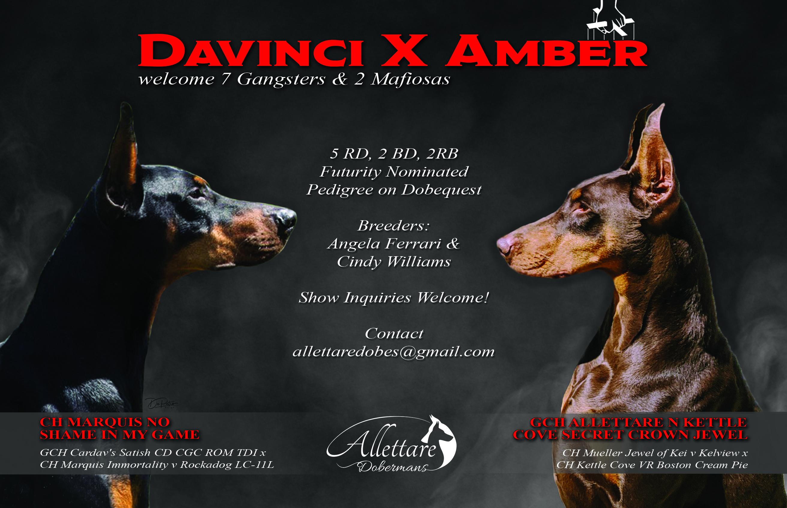 Davinci x Amber Litter Announcement