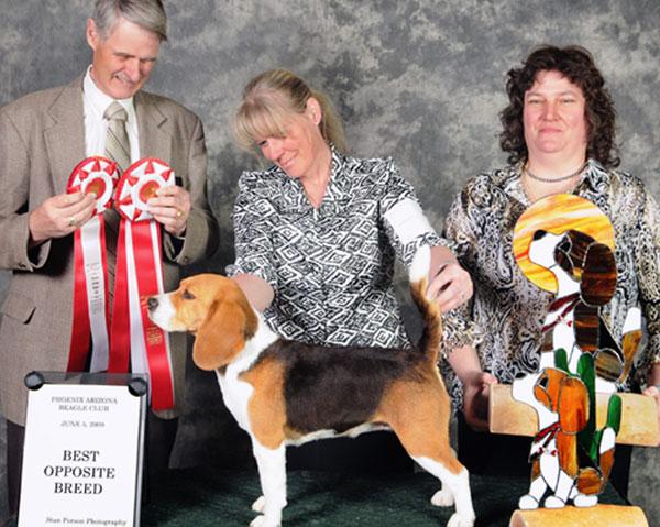 Phoenix Arizona Beagle Club