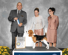 Hamlet Winners Dog Major.jpg