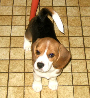 Sarah as a puppy