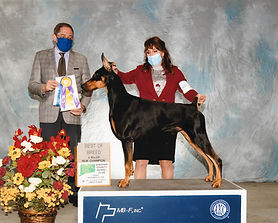 Granite finishes his CH going Breed and Group 3!