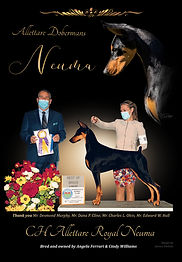CH Neuma in Showsight Magazine