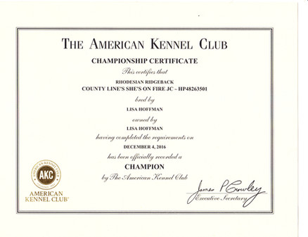 Reign Championship Certificate