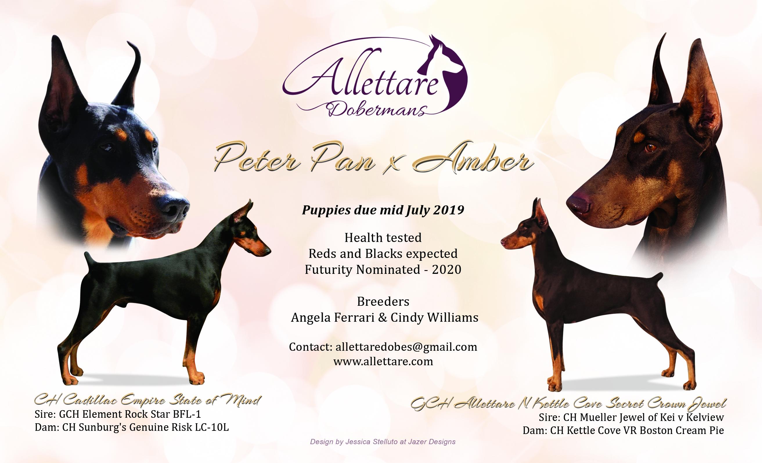 Peter Pan x Amber Litter Announcement