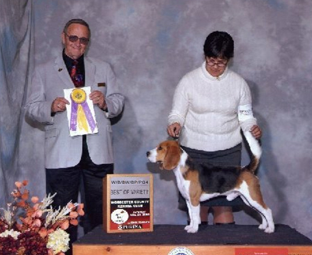 Worcester County Kennel Club - 11/29